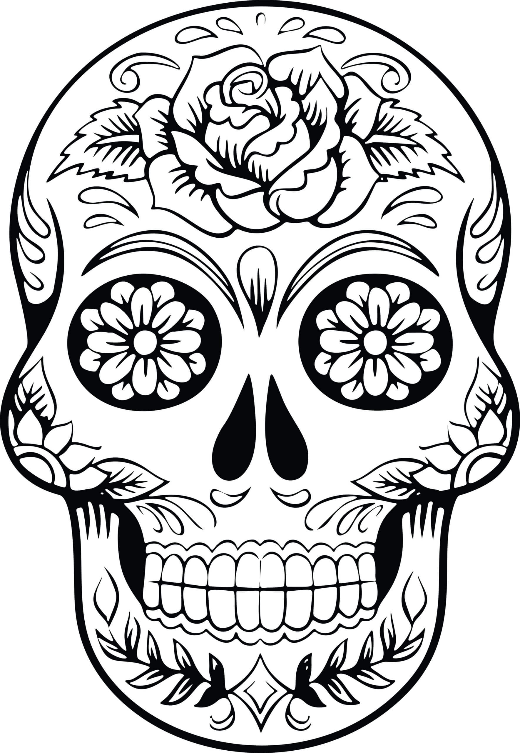 Best Coloring : Free Skull Anatomy Pages Muscular System With Regard To Blank Sugar Skull Template